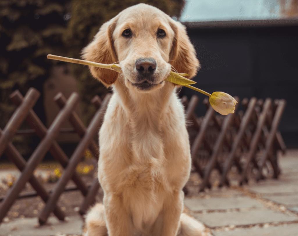 Honden blijven buiten